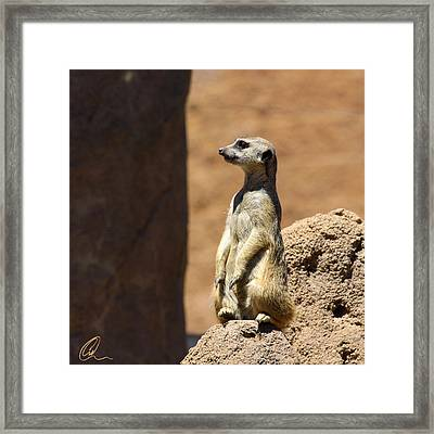 Meerkat Lookout Squared Framed Print by Chris Thomas