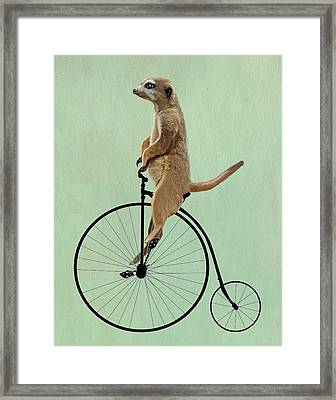Meerkat On A Black Penny Farthing Framed Print by Kelly McLaughlan