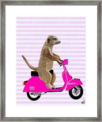 Meerkat On A Pink Moped Framed Print