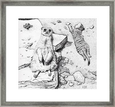 Meerkats Framed Print by Inger Hutton