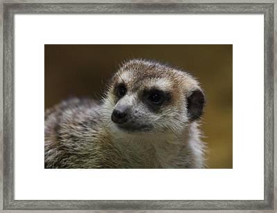 Meerket - National Zoo - 01136 Framed Print