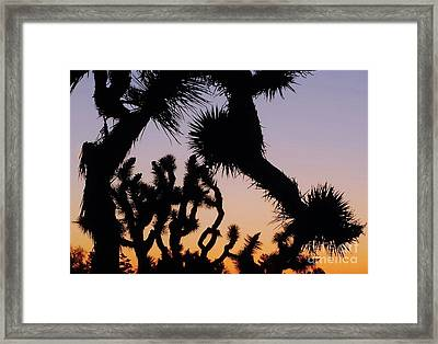 Meet And Greet Framed Print by Angela J Wright