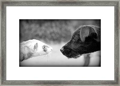 Meet And Greet Framed Print