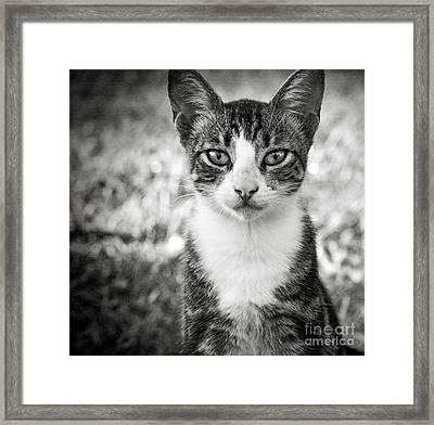 Meet George Framed Print by Karen Lewis