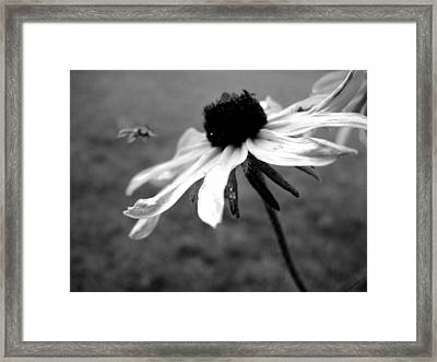 Meet In The Middle Framed Print by Gilbert Photography And Art