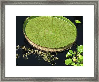 Meet Me At My Pad Framed Print by Debra     Vatalaro