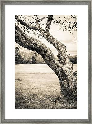 Meet Me Under The Old Apple Tree Framed Print