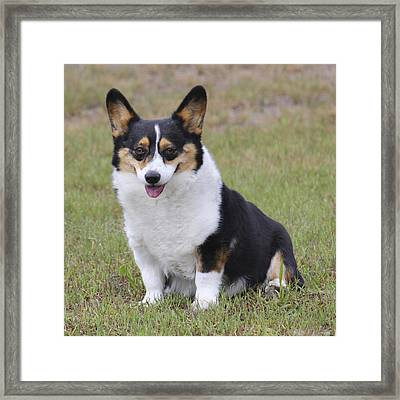 Meet Trixie Framed Print by Mike McGlothlen