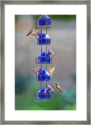 Meet-up At The Feeder Framed Print by Lynn Bauer