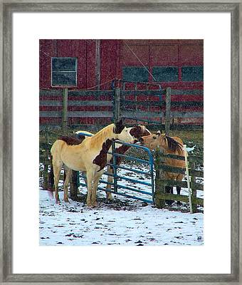 Meeting Of The Equine Minds Framed Print