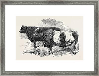 Meeting Of The Royal Agricultural Society At Salisbury No Framed Print