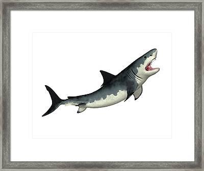 Megalodon Prehistoric Shark Framed Print