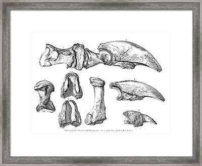 Megalonyx Jeffersonii Ground Sloth Bones Framed Print by American Philosophical Society