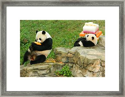 Mei Xiang And Bao Bao In Celebration Framed Print by Emmy Marie Vickers