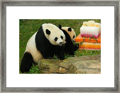 Mei Xiang And Bao Bao The Pandas Framed Print by Emmy Marie Vickers