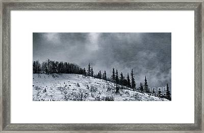 Melancholia Pines And Trees Framed Print by Priska Wettstein