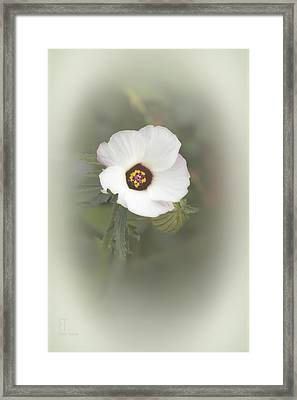 Melanie Framed Print by Elaine Teague