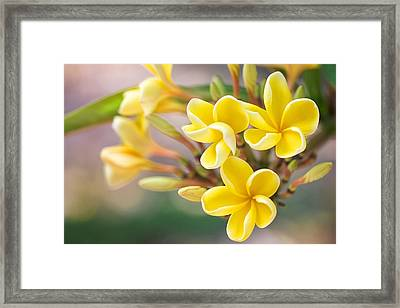 Melemele Melia Framed Print by Jade Moon