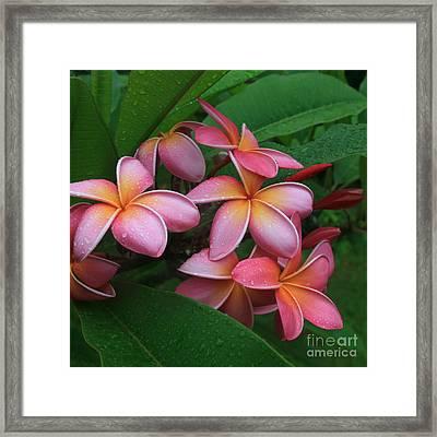 Melia Hae Hawaii Pink Tropical Plumeria Keanae Framed Print by Sharon Mau