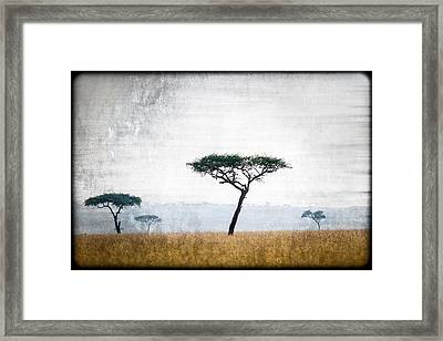 Mellow Mara Acacias Framed Print by Mike Gaudaur