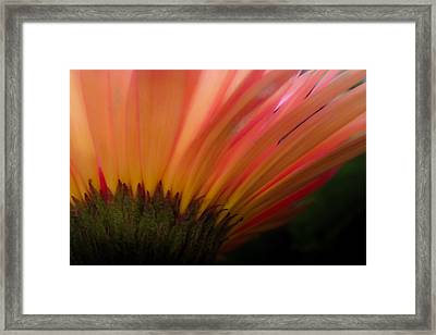 Mellow Mornings Framed Print by Karen Wiles