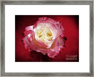 Mellow Passion Framed Print by Ellen Cotton