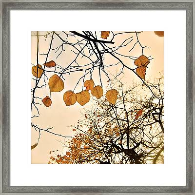 Mellow Touch Framed Print