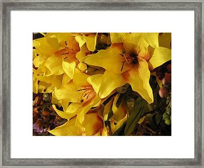 Mellow Yellow Framed Print