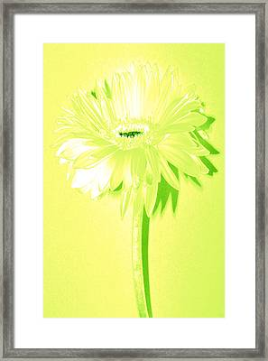 Melon Ball Zinnia Framed Print by Sherry Allen