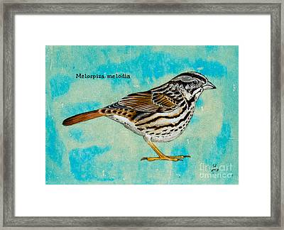 Melospiza Melodia Framed Print