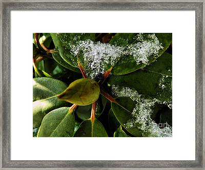 Framed Print featuring the photograph Melting Crystals by Robyn King