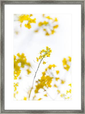 Melyn Framed Print by Meg Heller