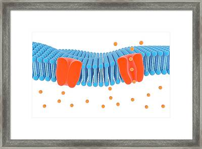 Membrane Channel Proteins Framed Print by Science Photo Library