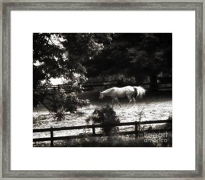 Memorial Day Reflection Framed Print by Cris Hayes