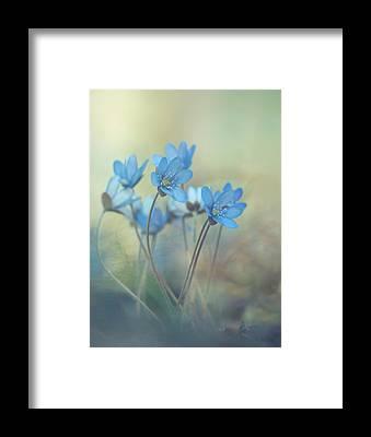 Violet Framed Prints