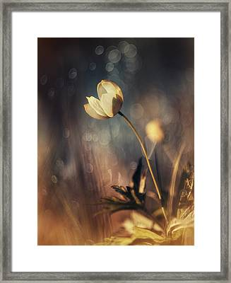 Memories Of Daylight Framed Print by Magda  Bognar