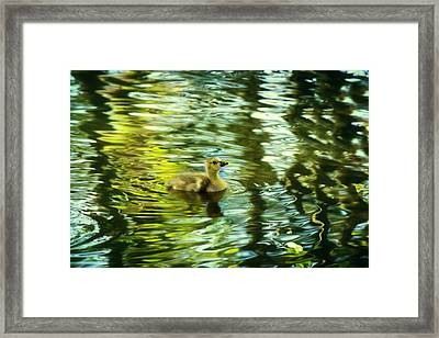 Memories Of Spring Framed Print by Melanie Lankford Photography