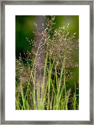 Memories Of Springtime Framed Print by Holly Kempe
