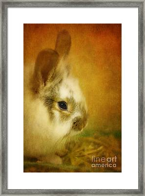 Memories Of Watership Down Framed Print