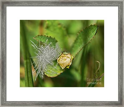Framed Print featuring the photograph Memories by Olga Hamilton