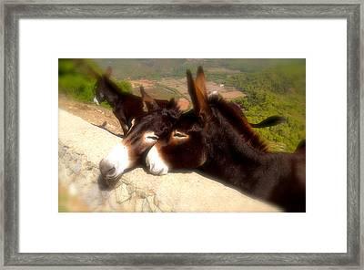 Menorcan Donkeys Framed Print by John Colley