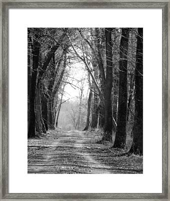 Framed Print featuring the photograph Mentha Mint Plantation   by Penny Hunt