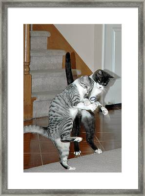 Meow Vows Framed Print