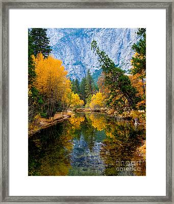 Merced River And Leaning Pine Framed Print
