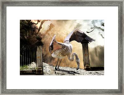 Mercy Framed Print by Christine Sponchia