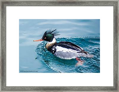 Merganser Duck Framed Print