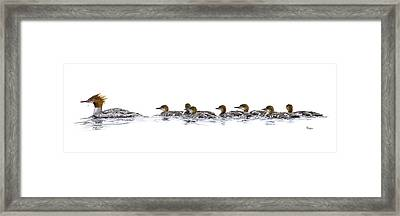 Merganser Family Framed Print by Brent Ander