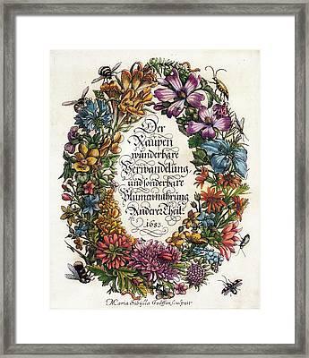 Merian's 'metamorphosis' (1683) Framed Print