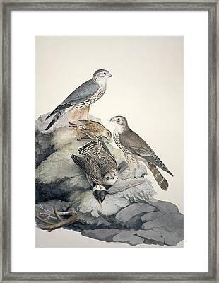 Merlin, 19th Century Framed Print