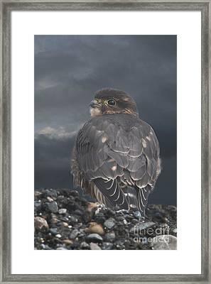 Merlin Framed Print